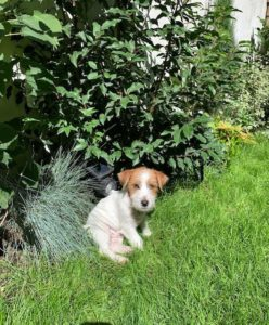 Toby - chien - christin le gal - sweetnestby christine
